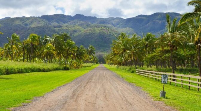 A dirt road leads through a grove of palm trees up into the Oahu hills